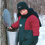 Collecting sap in Tremblant